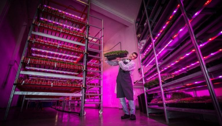Horticulture LED Grow Light Technology: Vertical Farming