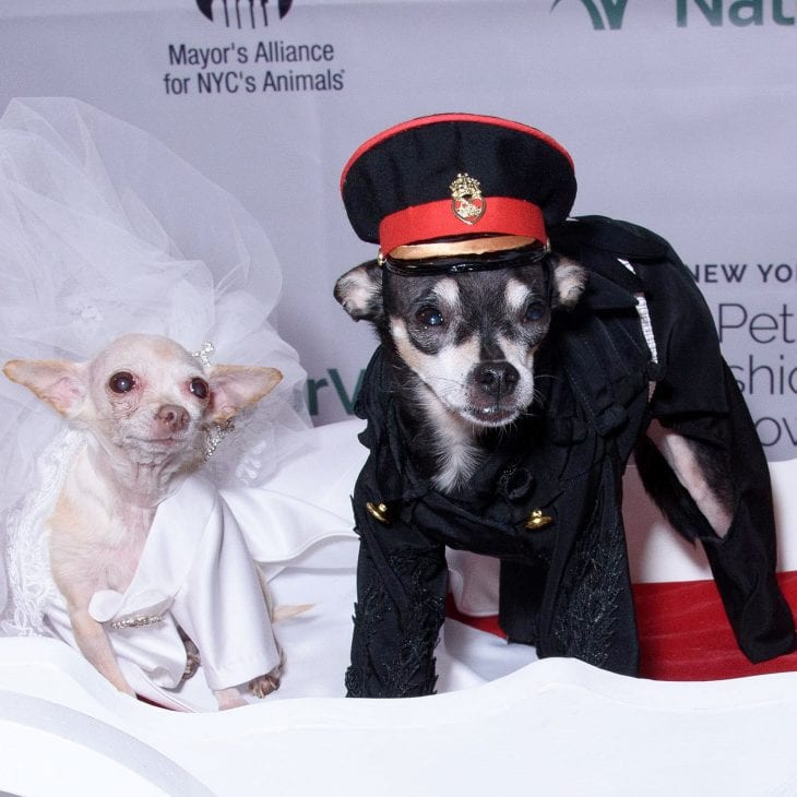 Meghan-Barkle-and-Harry-Prince-of-Tails