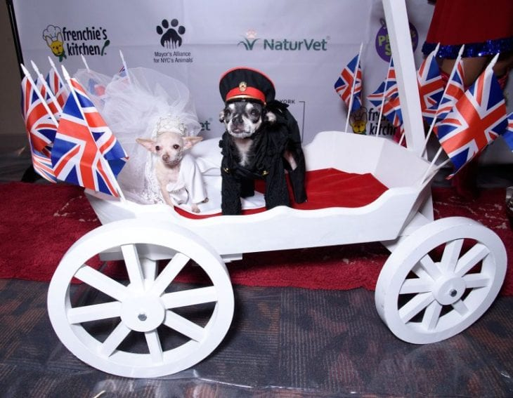 Meghan-Barkle-and-Prince-Harry-of-Tails-1