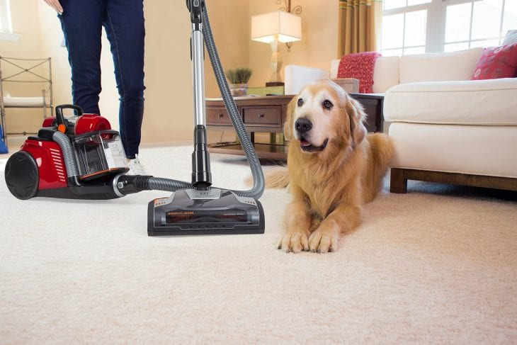 How To Remove Pet Hair From Clothes Furniture And