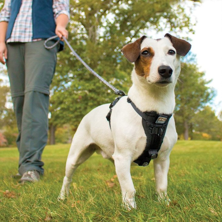 Why You Should Use A Dog Harness