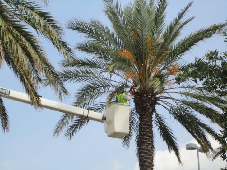 How Much Does It Cost to Trim Palm Trees? - The Frisky