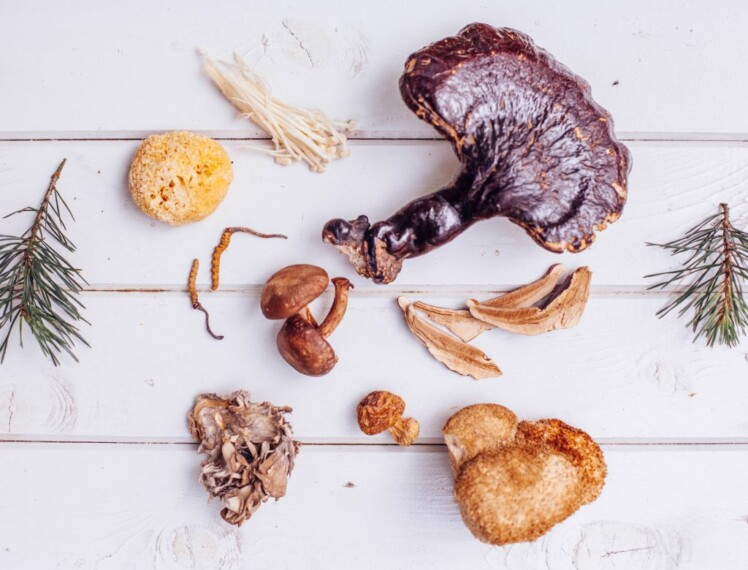 6 Medicinal Mushroom Extracts That Are Worth Trying.jpg